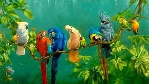 Parrots Wallpapers - Wallpaper Cave