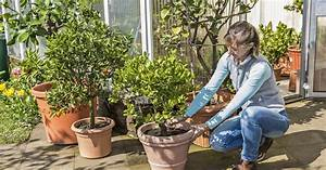Kuebelpflanzen Fuer Terrasse : k belpflanzen 5 tipps f r den perfekten saisonstart mein sch ner garten ~ Orissabook.com Haus und Dekorationen