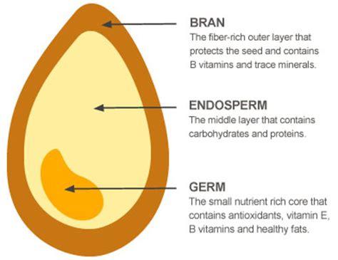 Define Food Pantry by Whole Grain Vs Whole Wheat Sara Snow