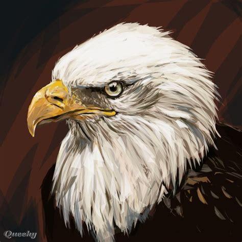 bald eagle  animals speedpaint drawing  pppman