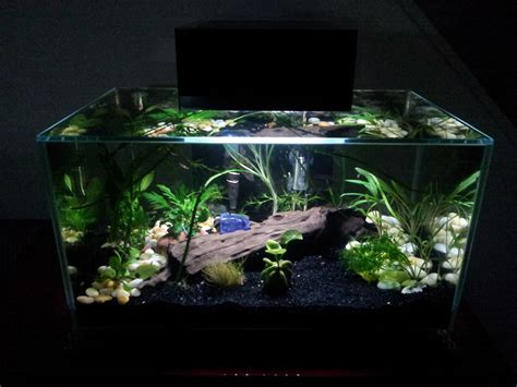 nano aquarium fish freshwater freshwater best nano aquarium 2 189 14 gallons welcome to the aquarium society
