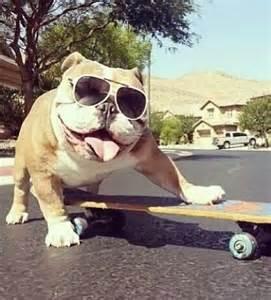 Funny English Bulldog