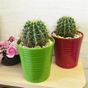 Pot A Cactus : 1 x large cactus succulent evergreen indoor office cacti plant ceramic pot ebay ~ Farleysfitness.com Idées de Décoration