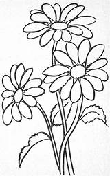 Coloring Margarita Flower Awesome Pages Re Ius Tech Must Know Glass sketch template