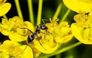 Ameisen Entfernen Garten : was hilft gegen ameisen im garten was hilft gegen ameisen ~ Lizthompson.info Haus und Dekorationen
