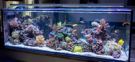 Cool Product Alert Bioluminescent Marine Algae Aquarium by China High Quality Fish Aquaria Tank With Acrylic Board