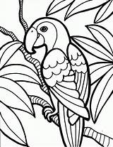 Coloring Birds Pages Parrot Bird Kind Knowing sketch template