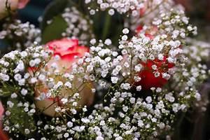 Beau Bouquet De Fleur : beau bouquet des fleurs blanches et des roses photo stock ~ Dallasstarsshop.com Idées de Décoration