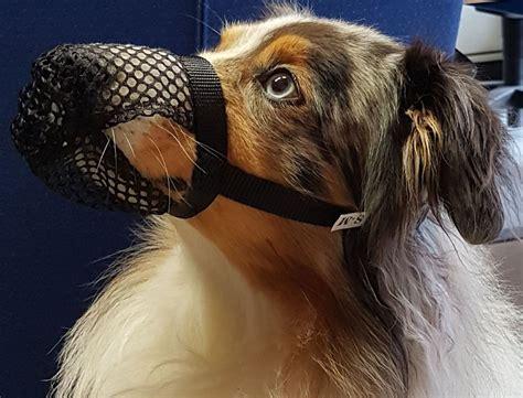 giftkoederschutz fuer hunde von trixie giftkoederschutz