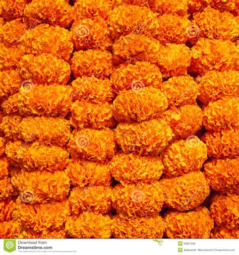 marigold garland marigold flowers garland background royalty free stock image image 30957056