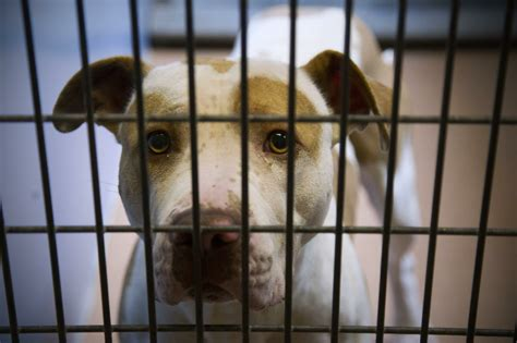 vols animal volunteers object to animal shelter practices the san diego union tribune
