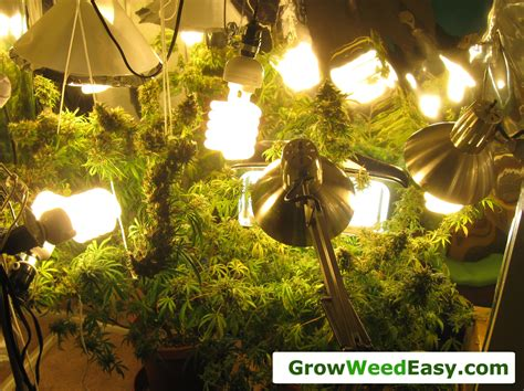growing weed with fluorescent lights easy beginner grow cannabis guide w cfl grow lights how