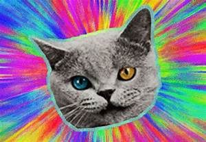 cat wang on Tumblr