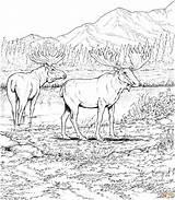 Deers Elche Wildlife Supercoloring Hundert Prozent Mein Partner Coloringhome Carolinaaac Trueinfo sketch template