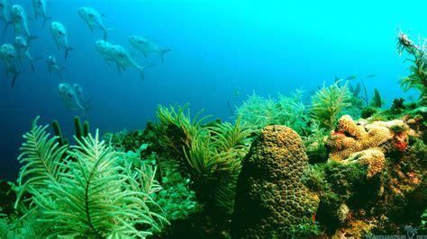 77 Ocean Life Wallpaper On Wallpapersafari