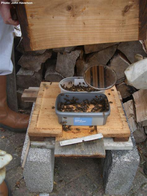 beekeeping   warre hive feeders