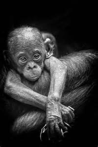 Animal Baby Monkey