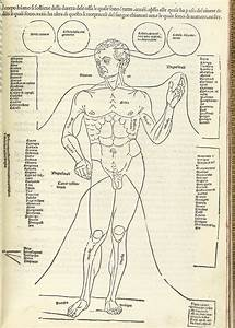 Man And Girls Body Parts Name - Diagram Body Of Anatomy