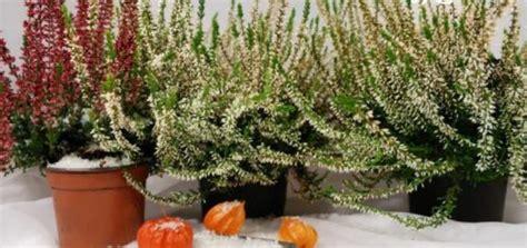 plante exterieur en pot sans entretien plante exterieur en pot sans entretien 28 images les 25 meilleures id 233 es concernant