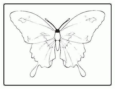 life cycle   butterfly coloring page coloring home