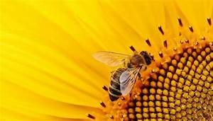 Celebrating World Bee Day  Fun Facts About The Honey Bee