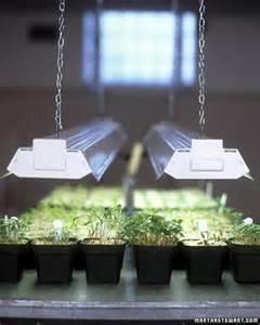 seed starter grow lights seed starting 101 martha stewart home garden
