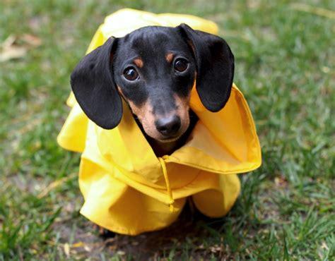 dogs wearing raincoats riot fest