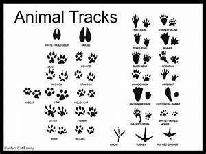 Animal Tracks Identification Pictures to Pin on Pinterest ...