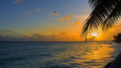 Ocean Sunset Palm Barbados Monitor Ultrawide