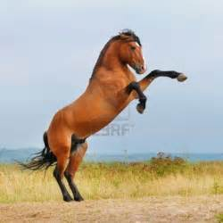 horse - Horses Picture