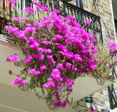 blumen für den balkon blumen und pflanzen f 252 r den balkon frische atmosph 228 re schaffen