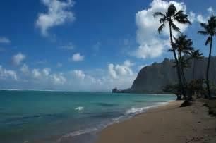 Hawaiian Palm Trees Island