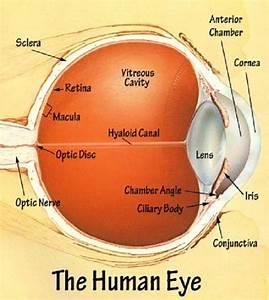 Human Eye Diagram Ks2 Human Eye Diagram Ks2