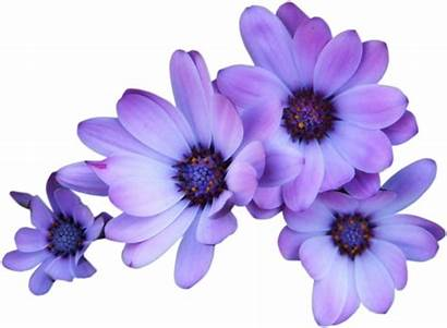 Purple Transparent Flowers Flower Background Pngkit Sticker