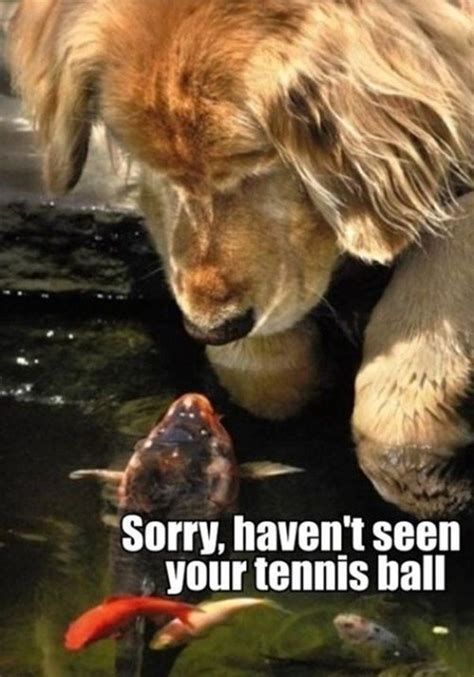 wholesome animal memes   thechive
