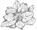 Spinach Plant Deviantart Drawings sketch template
