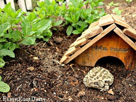 Flowering Herbs For Your Garden  Toad House In Your