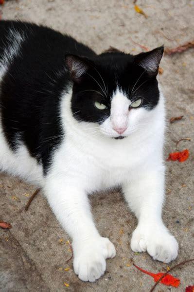 hemingwayhomecom cats