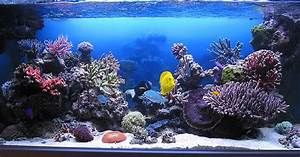 saltwater aquarium backgrounds