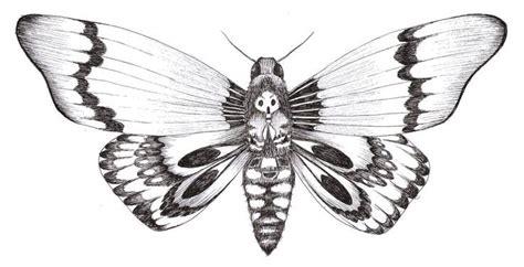 papillon nuit dessin recherche google tattoos moth