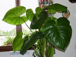 Grande Plante Verte : plante verte a grande feuille photo de fleur une ~ Premium-room.com Idées de Décoration