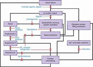 Pharmacotherapy Of Congestive Heart Failure