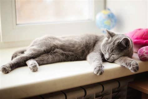 Cat Stress & Anxiety