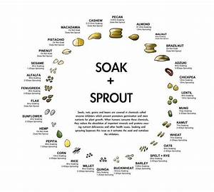 Your Guide To Soaking  U0026 Sprouting Whole Grains  Beans