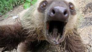 SLOTH ATTACKS CAMERA MAN! - YouTube