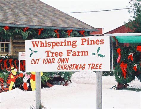 cut your own christmas tree lexington ky whispering pines tree farm thome road tree farm christmastreefarms net