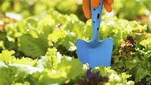 Schnittgut Alles Aus Dem Garten : salat selbst pflanzen tipps und tricks ~ Buech-reservation.com Haus und Dekorationen