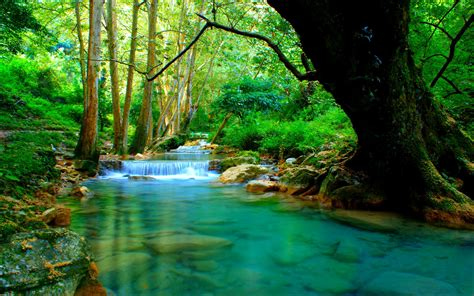 Forest River Wallpapers Wallpaper Cave
