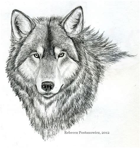 pencil drawings  animals ideas  pinterest