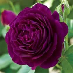 kitchen gardening ideas twilight zone grandiflora jung garden and flower